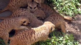 Earth peoples funny cute animal. Video of earth peoples funny cute animal stock footage