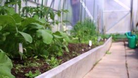 Video in een plantaardige die serre van transparant polycarbonaat wordt gemaakt stock footage