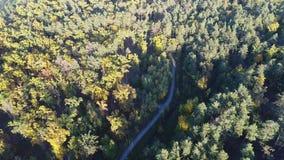 Video för flyg- sikt av apelsinöverkanten av träd i en parkera i höst stock video