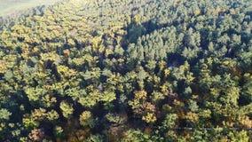 Video för flyg- sikt av apelsinöverkanten av träd i en parkera i höst lager videofilmer