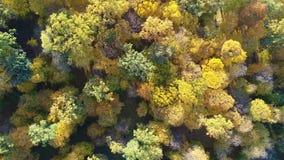 Video för flyg- sikt av apelsinöverkanten av träd i en skog i höst lager videofilmer