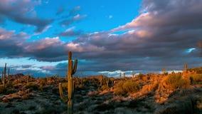 Video för schackningsperiod för tid för Arizona ökensolnedgång med kaktuns