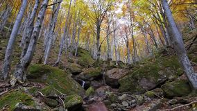Autumn forest with falling leaves stock footage