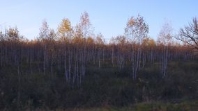 Video filming of the autumn forest from the window of a driving car or train. stock video footage
