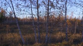Video filming of the autumn forest from the window of a driving car or train. stock video