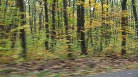 Video footage of driving through the colorful autumn forest on the high speed stock footage