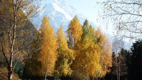 Autumn landscape in the mountains. This video footage shows the autumn landscape. Against the backdrop of colorful autumn trees. The clip can be the perfect stock video footage