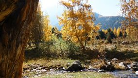Mountain Creek During Autumn. This video footage shows the autumn landscape. Against the backdrop of colorful autumn trees. The clip can be the perfect stock video