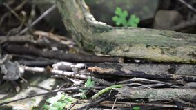 Frog with leaf. Video of frog with leaf stock footage