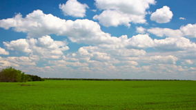 Video of green field and blue sky stock footage