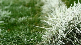 Video of green grass covered by freezing fog Stock Image