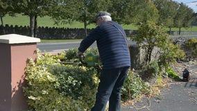 Video hoger tuinmanmannetje in de in orde makende haag van het tuinknipsel met machtshulpmiddelen stock footage
