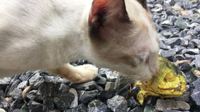 Cat eating fish on the ground stock footage