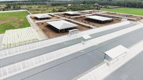 Video illustration of modern clean fenced farm with square paddocks for cows. Aerial shooting shows several roofs of houses belonged to modern, clean, fenced stock video footage