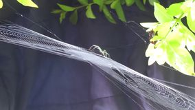 Insect arachnid web nature. Video of insect arachnid web nature stock video