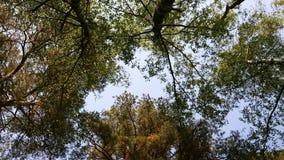 Video 4K Ansicht von unten von Bäumen mit grünem und gelbem Laub stock footage