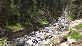 video 4K av den snabba strömmen i Kirgizistan för skog för berggranträd lager videofilmer
