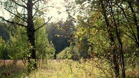 Video 4K Landwirtschaftliche Landschaft Wiese mit wild wachsenden Pflanzen und Insekten stock footage