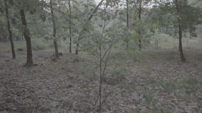 Video of misty dark deciduous forest in the early morning during spring time. stock video