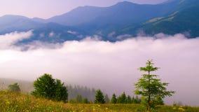 Morning mist in mountans stock video