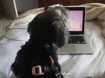 Video och hundkapplöpning arkivbild