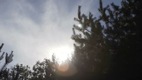 Video 1080p - Crowns of trees with bright afternoon sun and rays.  stock video footage