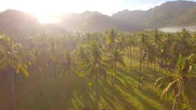 Palm trees surrounded by mist at sunset. Video of palm trees surrounded by mist at sunset stock footage