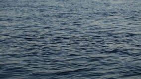 Video per colore profondo pieno d'ammirazione del fiume con le ondulazioni su  stock footage