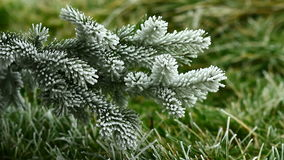 Video of pin tree covered by freezing fog stock footage