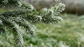 Video of pin tree covered by freezing fog stock video footage