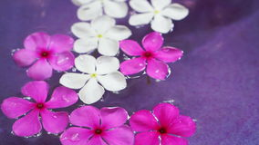 Video pink flowers floating in bowl of water from top view. Spa decoration stock video