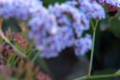 Video porpora del fiore video d archivio