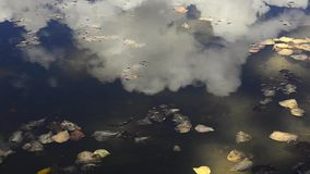 Video of reflection of autumn leaf on water stock footage