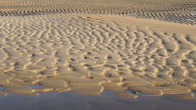 Video Ridges and furrows on the beach. wet sand at the beach showing form after tide stock video footage