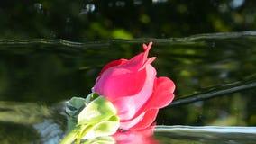 Video rosa e della cascata di amore, archivi video