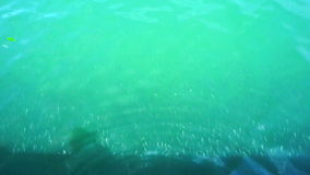 Video of school of small silver fish swimming in green tropical ocean boat pier. School of small silver fish swimming in green tropical ocean boat pier stock video