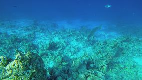 Video of the seabed. Past the camera swims fish. Shooting under water. Clear sea water stock video