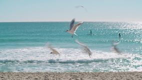 Seagulls flying low above a sandy beach. Video of Seagulls flying low above a sandy beach stock video