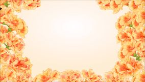 Video seamless loop butterfly Vanessa atalanta and yellow hibiscus stock footage