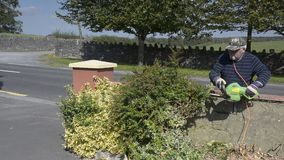 Video senior male in garden cutting hedge with power tools. stock video footage