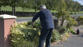 Video senior male in garden cutting hedge with power tools. stock footage