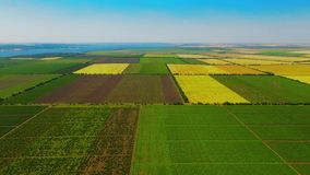 Aerial nature landscape beautiful fields and vineyards,Ukraine stock video