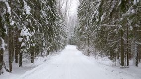 Walk along path in winter snow forest. Video shot of walk along path in winter snow forest stock video