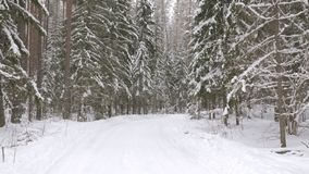 Walk along path in winter snow forest. Video shot of walk along path in winter snow forest stock footage