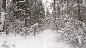 Walk along path in winter snow forest. Video shot of walk along path in winter snow forest on cloudy day stock video