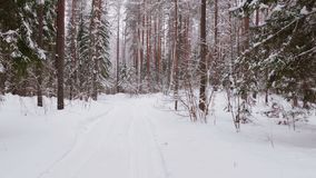 Walk along path in winter snow forest. Video shot of walk along path in winter snow forest on cloudy weather stock video footage