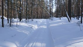 Walk along path in winter snow forest. Video shot of walk along path in winter snow forest on sunny weather stock video