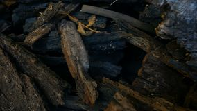 Chopped Tree Bark stock footage
