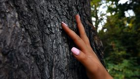 Female Hand Touching Tree stock video footage