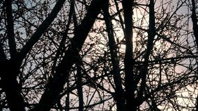 Tree branches through the suns rays. This video shows the tree branches through the suns rays stock footage